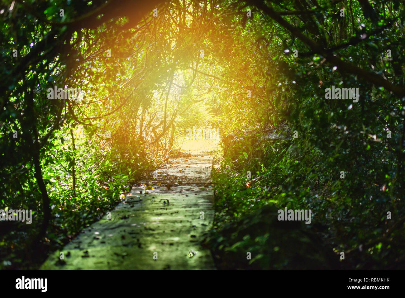 https www alamyimages fr tunnel de la nature arbre lumiere tunnel de lumiere light ajoute le vert des arbres dans la foret des cheminements image230950431 html