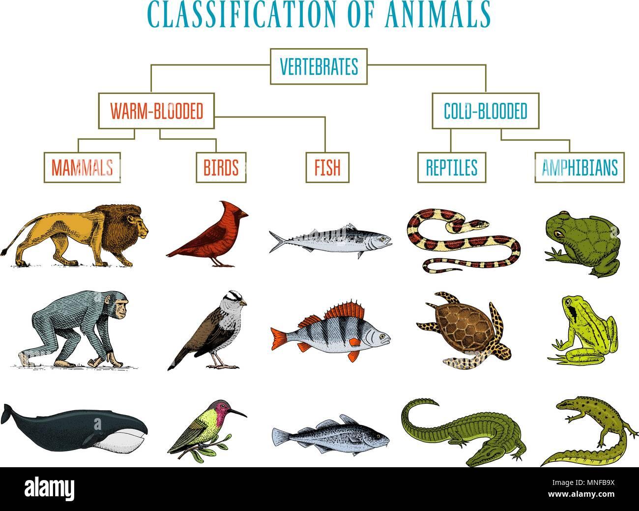 La Classificazione Degli Animali Rettili Anfibi Mammiferi