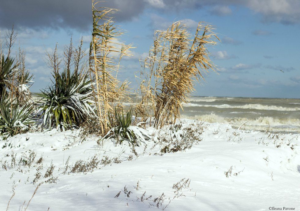 Mare-neve2017
