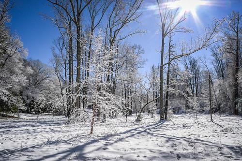 Greenville Snow-003