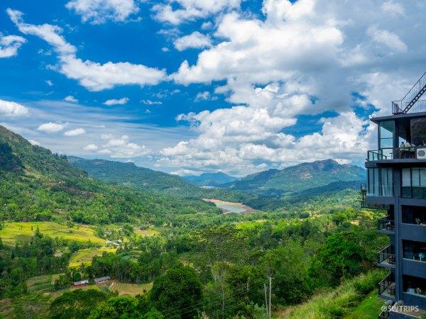 Tea Bush - Ramboda, Sri Lanka.jpg