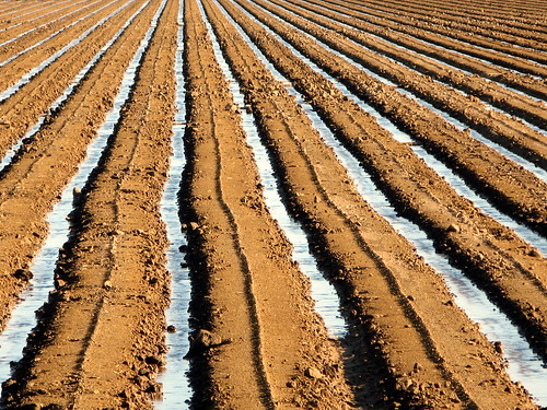 Image result for irrigated dirt