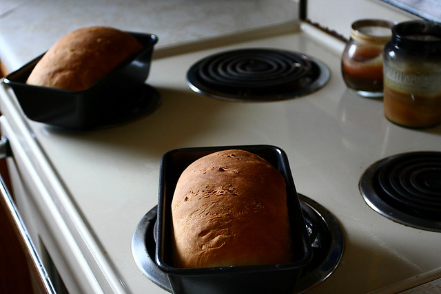 Bread on the Oven