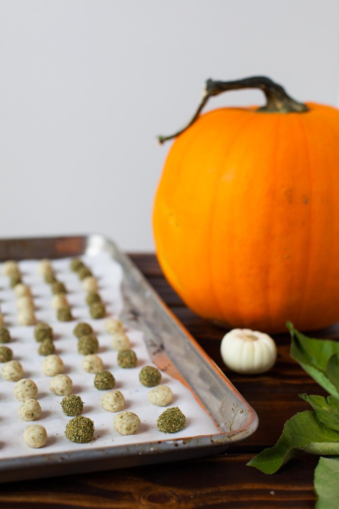 Mini Kitty Pumpkin Spice Doughnut Holes (Yes, For Your Cat!) by Kayleigh Kosmas