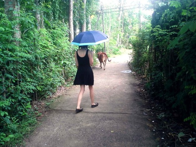 Sometimes There's A Cow In Your Path