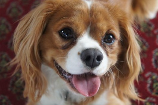 Image result for happy dog flickr