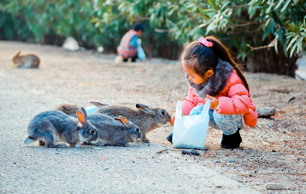 大久野島兔子島 Hiroshima 204