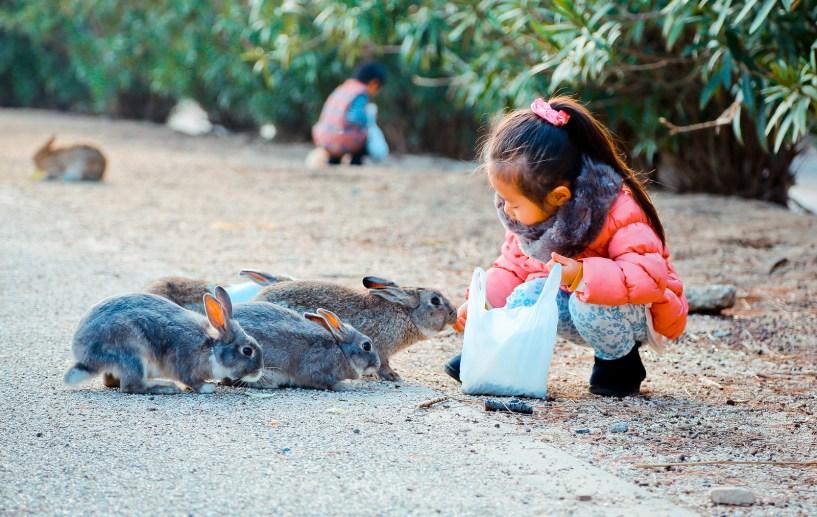2016 大久野島 Hiroshima 204