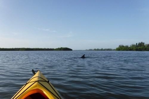 Indian River Sunrise Kayaking-40