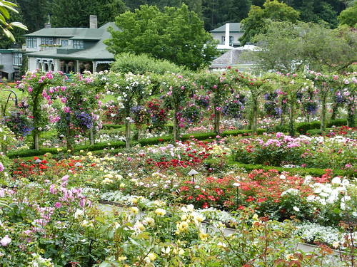 Things to do on Vancouver Island: Butshart Gardens