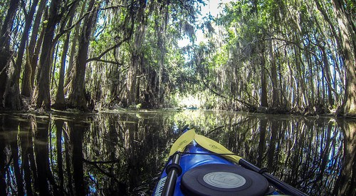 Lowcountry Unfiltered at Okefenokee-92