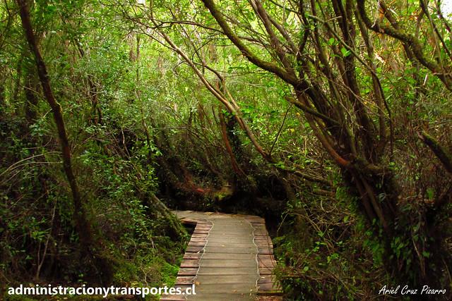 Parque Nacional Chiloé - Sendero El Tepual