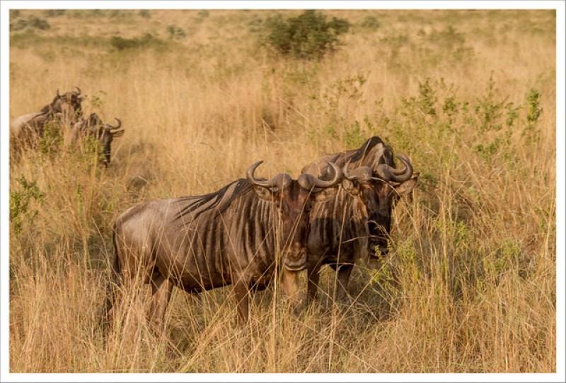 MasaiMara-70