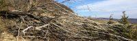 Decretan zona de catástrofe por escasez de agua en 14 comunas de la V región