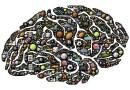 Vitamin B12 Brain