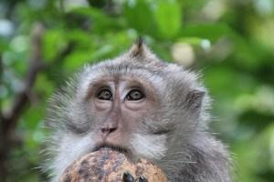 Not a monkey nut