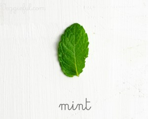 mint leaf herb
