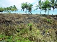 Todavia, Pablo Jimenez no ha podido limpiar todo el terreno pero es una cuestión de tiempo