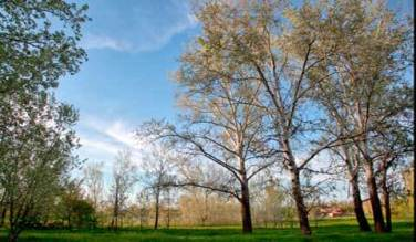 дерево,трава,небо,природа,пейзаж