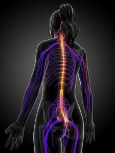 Osteopathe bordeaux Cauderan-Indications ostéopathiques - Système neurologique - Névralgie Cervico-Brachiale, Névralgie d'Arnold, Névralgie faciale Névralgie intercostale, sciatalgie, cruralgie