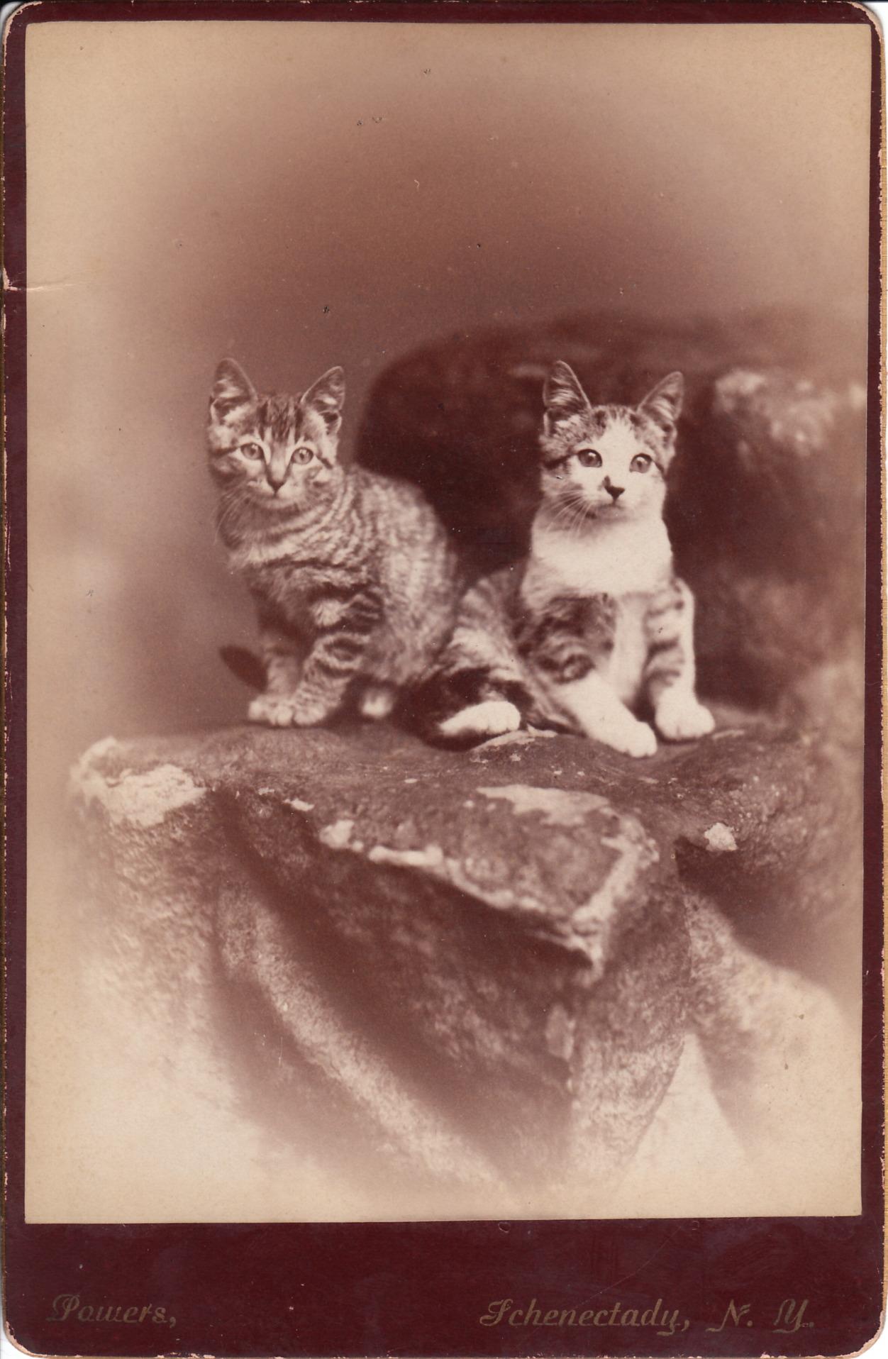 CENTURY CATS_0004