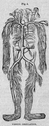 Venous Circulation