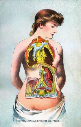 Internal Organs of Chest and Pelvis