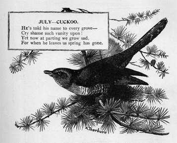July - Cuckoo