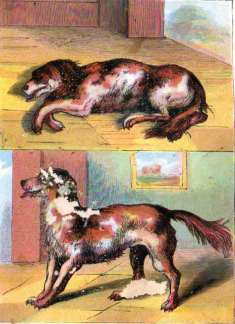 Old Mother Hubbard's Dog