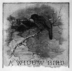 A Widow Bird