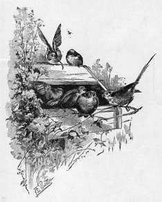 Birds in Birdhouse