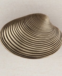 Acorn Manufacturing Clam Shell Cabinet Knob Antique Brass