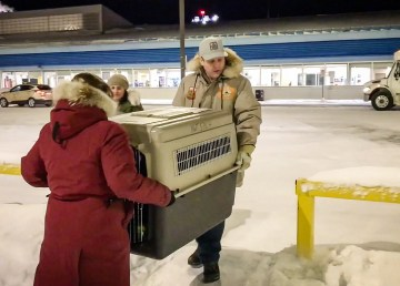 Cabin Radio's Adam Vivian and SPCA staff member Kendra carry a loaded dog crate into Yellowknife Airport