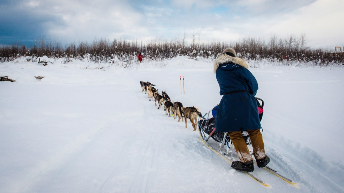 Have northerners been breeding the wrong type of sled dog?