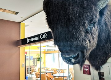 A mounted bison head hangs by the entrance to Javaroma, the present tenant at the NWT's Legislative Assembly