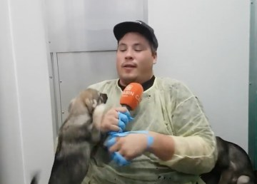 Cabin Radio's Jesse meets a puppy at the NWT SPCA shelter