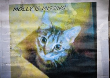 Molly the cat is pictured in a poster put up by Susan Hunt in October 2018