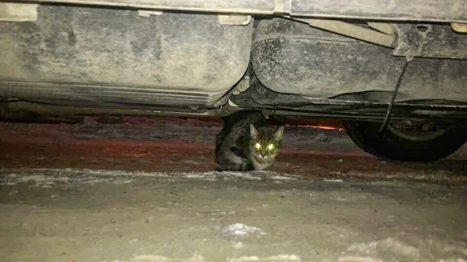 Molly the cat is seen under a truck in a photo uploaded to Facebook by Evelyn Ray