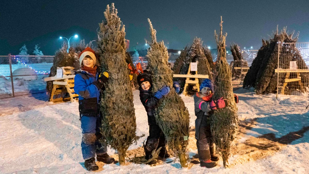 In the boreal forest, rumours of a Christmas tree shortage