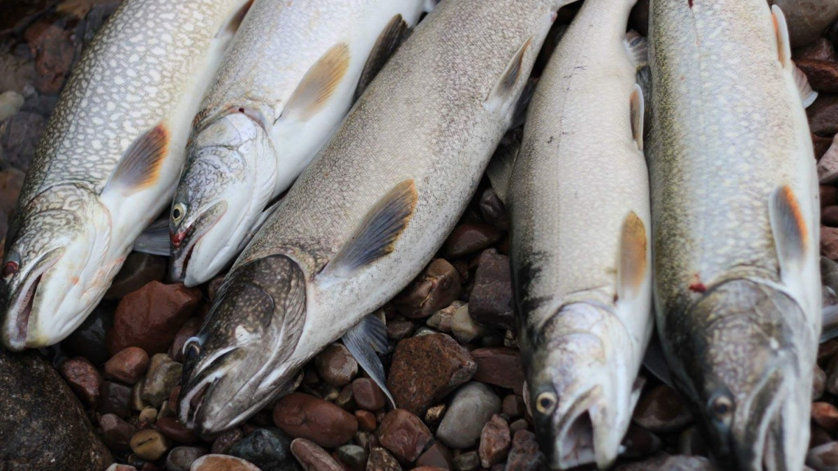 Hay River to finally receive a new commercial fish plant