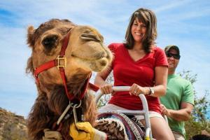 ride a camel in Los Cabos, wild canyon the best cabo adventures cabosanlucastours