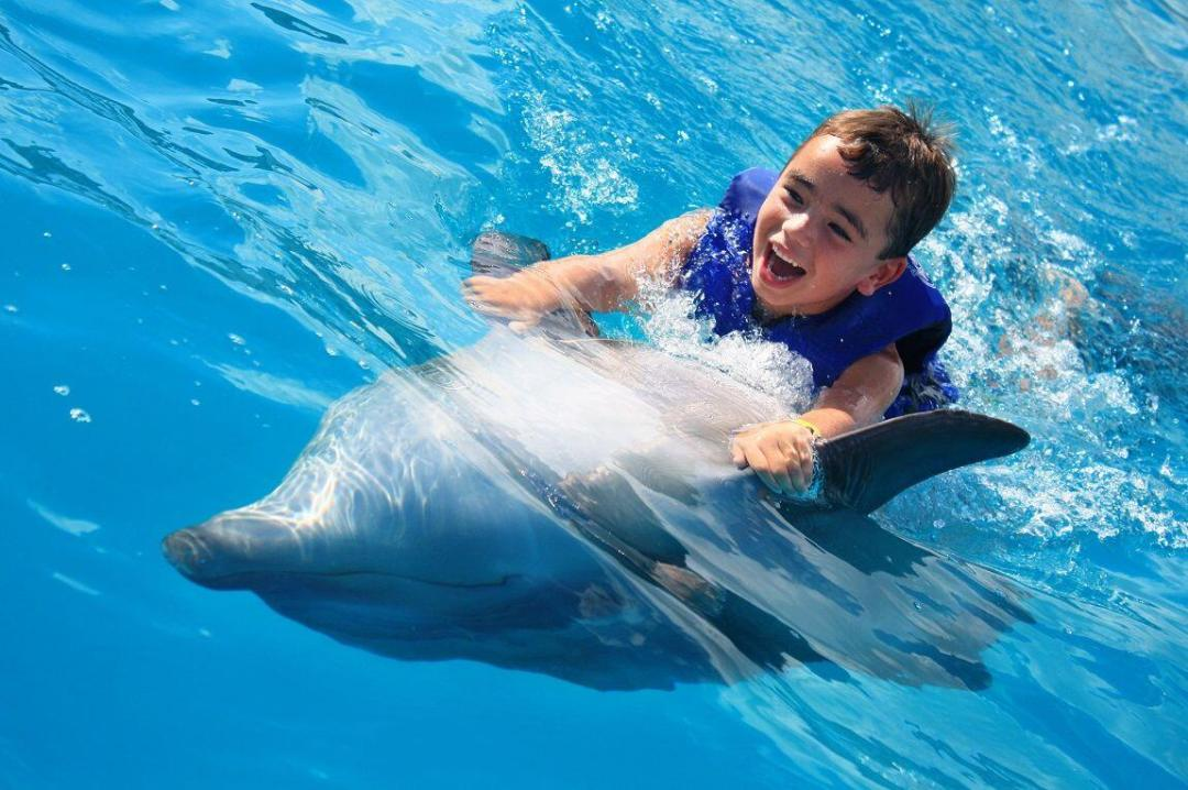 belly ride during the dolphin kids program gives a special opportunity to interact and learn about dolphins in los cabos