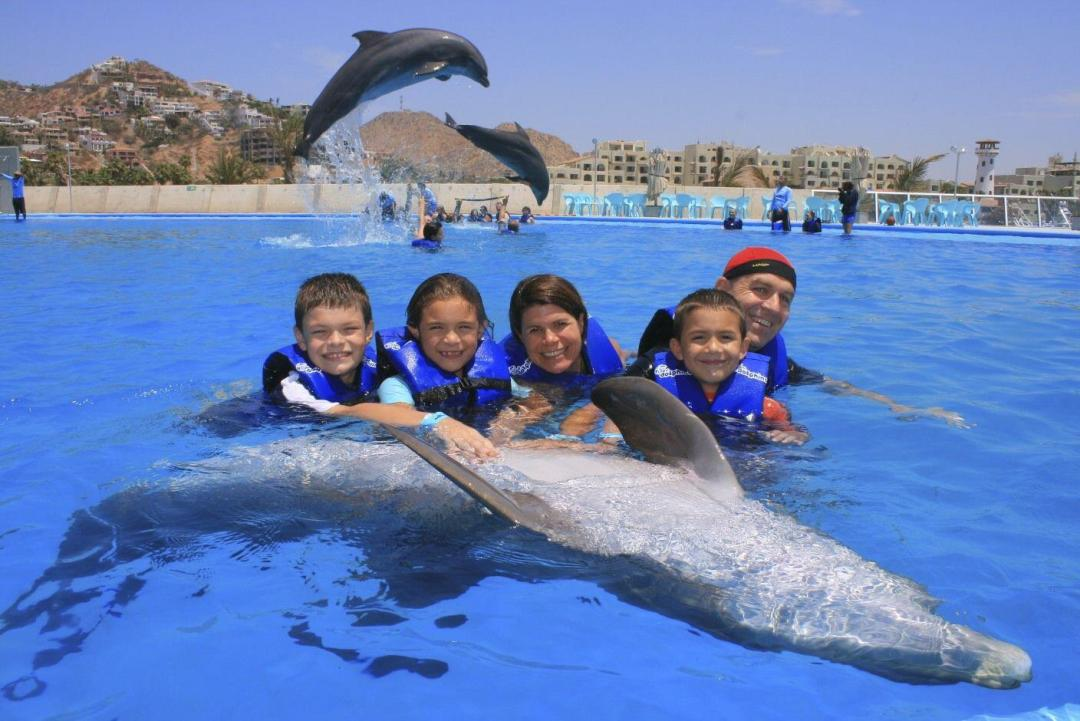 dolphin-swim-family