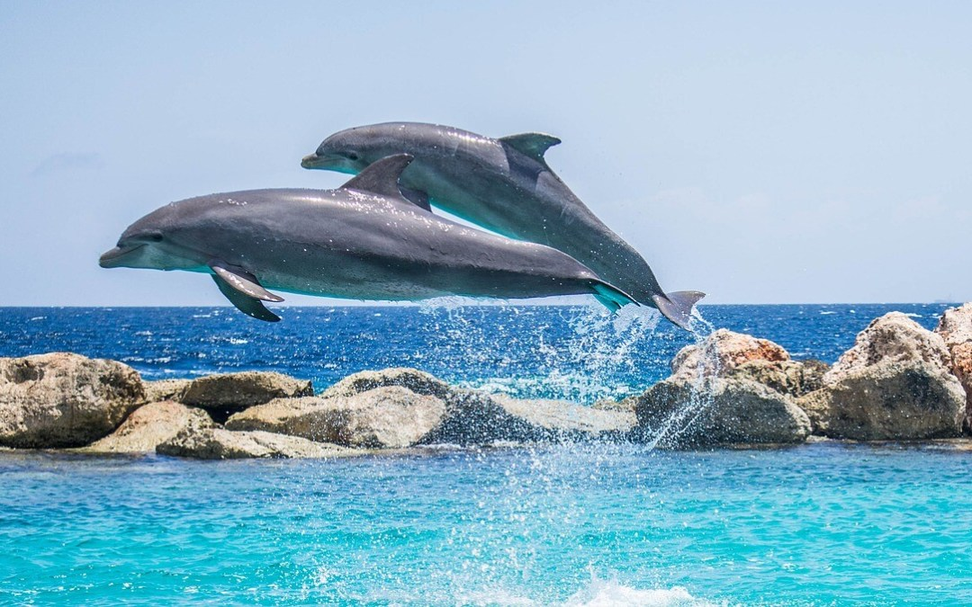 There are many things to do in cabo san lucas that involve animals. Sign up for a tour today to see horses, camels, dolphins, or whales.