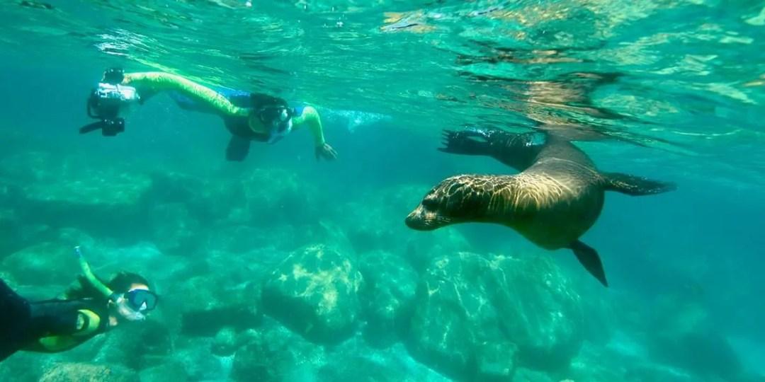 espiritu-santo-island-swim-with-sealions