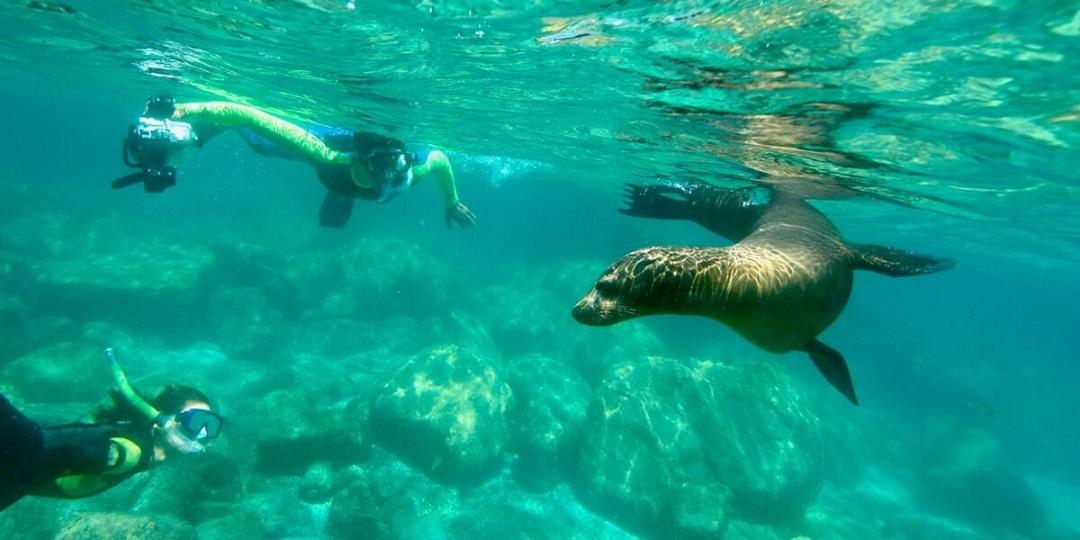 espiritu-santo-island-swim-with-sealions