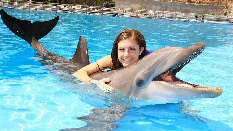 swim with the dolphins in cabo san lucas, discounted dolphin swims with cabo adventures