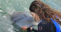 kiss a dolphin in cabo san lucas, swim with the dolphins