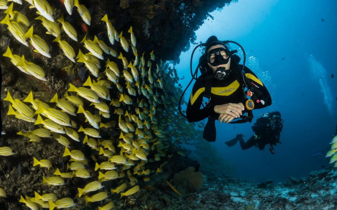 Learn to Scuba Dive in Cabo: Scuba Diving Course Options