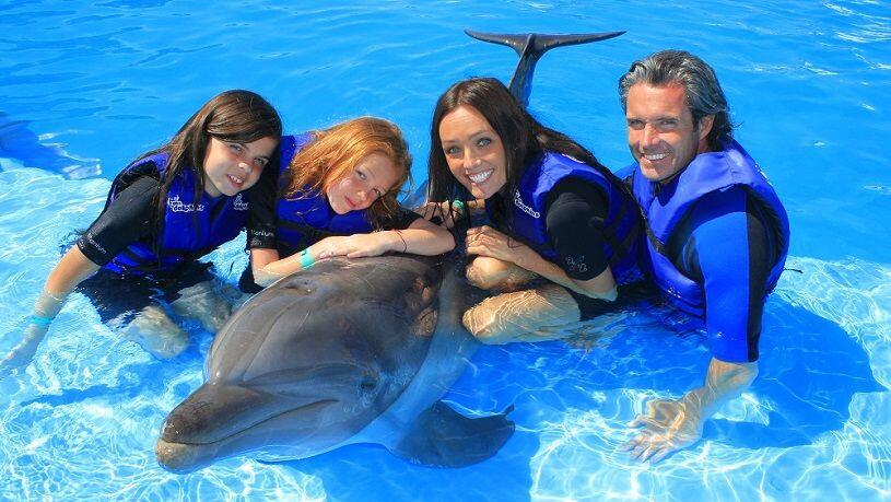 private Dolphin swim Cabo dolphins Dolphin swim program in Los Cabos cabosanlucastours